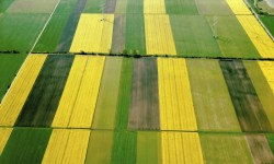 Intensive agricultural systems overlook the ecological benefits of regenerative farming. Photograph: blickwinkel/Alamy